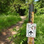 Laura Secord Walk 2019-06-22_ (66)